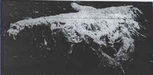 "Fig. 3. Picture of the Deepdale Holm carcass found at Mainland, Orkney Islands. Charles Rankin thought it was confirmed as basking shark and then reported about a ""similar"" carcass washed ashore in Gourock. (From ""Basking shark or ""Scapasaurus""?"", 1942. The Orkney Blast. Used according to § 51 Urheberrechtsgesetz)."